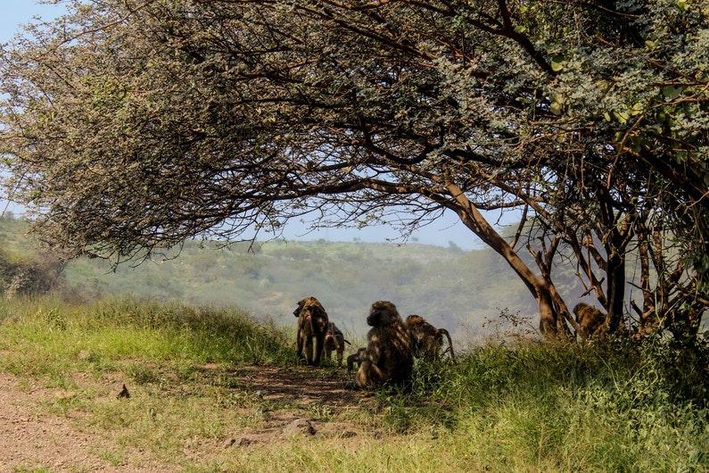 curiosidades de etiopia